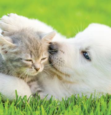 Playful Puppies & Kittens™