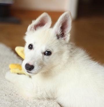 Puppys Pet Wellness
