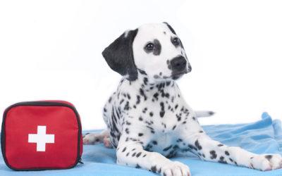 Pet Emergency Kit