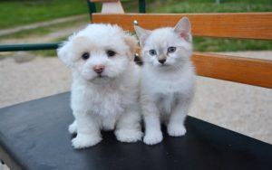 The Right Way to Introduce a Dog and Cat
