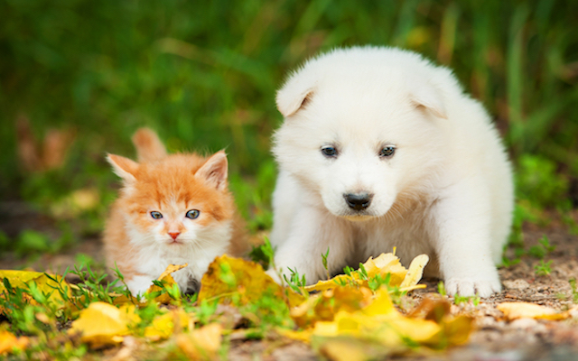 puppy and kitten playing in leaves