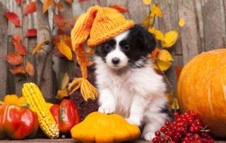 Pet Safety During Thanksgiving