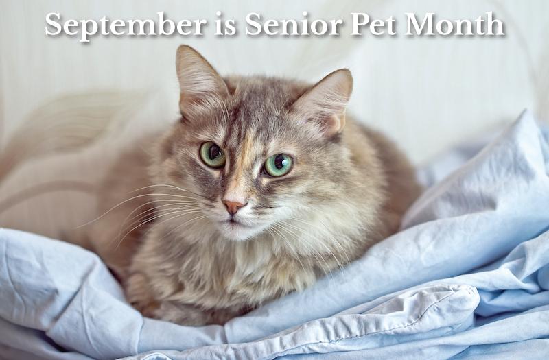September is senior pet month
