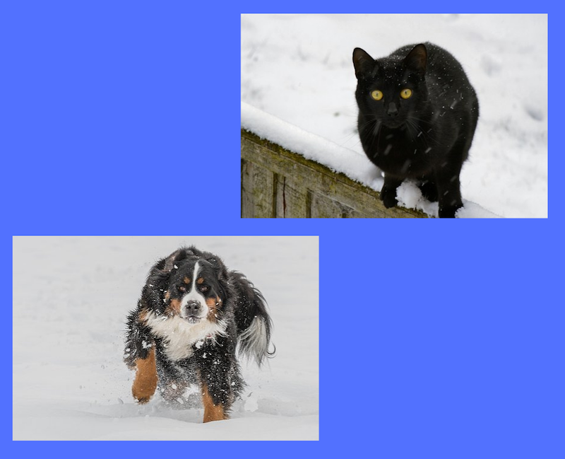 Winter Safety for Pets